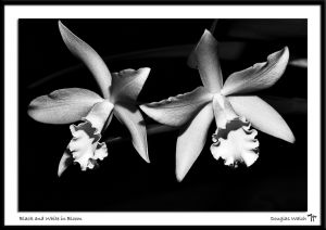 _MG_6069 Black and White in Bloom.jpg